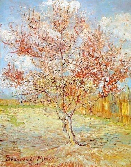 Van Gogh's Peach Tree