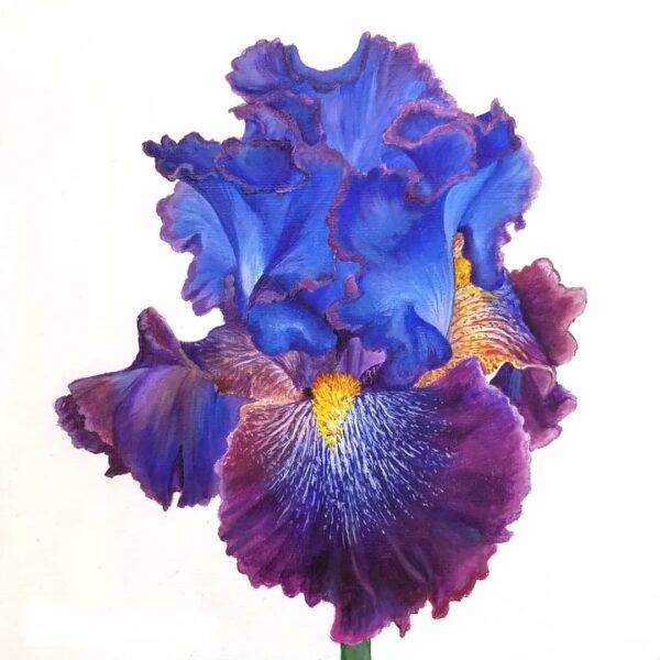 Iris Unmasteredclass