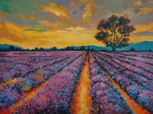 Fields of Lavender © Studio Vino