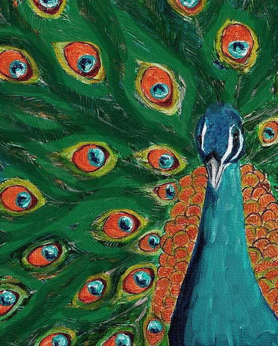 Mr Peacock © Studio Vino